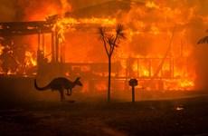 Năm thảm họa 2020: Cháy rừng giảm số lượng nhưng tăng về quy mô