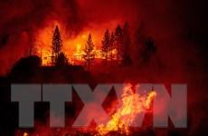 Thảm họa thiên nhiên khiến thế giới tổn thất 210 tỷ USD trong năm 2020