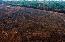 WWF: Diện tích rừng biến mất trong thập kỷ qua lớn hơn cả nước Đức