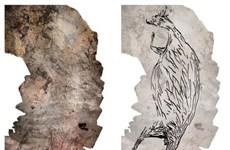 Phát hiện bức vẽ kangaroo trên đá có niên đại lâu đời nhất ở Australia