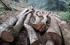 Phú Thọ: Xử nghiêm vụ phá rừng đặc dụng ở Vườn quốc gia Xuân Sơn