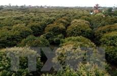 Thời tiết thuận lợi, vải sớm Thanh Hà hứa hẹn vụ mùa bội thu