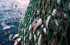 Chuyên gia môi trường cảnh báo trữ lượng cá tự nhiên đang bị đe dọa