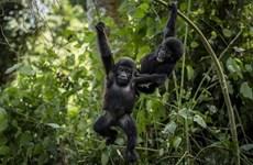 Xung đột đe dọa hơn 200 loài động, thực vật nguy cấp trên thế giới