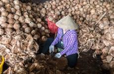 Tập đoàn Bỉ muốn hợp tác Việt Nam sản xuất than hoạt tính từ xơ dừa