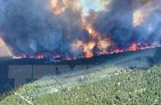 Canada: Quân đội được đặt trong tình trạng trực chiến do cháy rừng