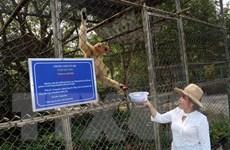 Phạt 10 triệu đồng đối tượng nuôi nhốt cá thể khỉ đuôi dài trái phép