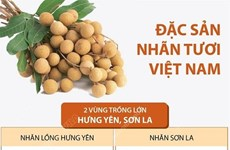 [Infographics] Đặc sản nhãn tươi Việt Nam vươn mình ra thế giới