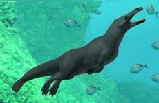 Ai Cập phát hiện hóa thạch cá voi lưỡng cư có niên đại 43 triệu năm