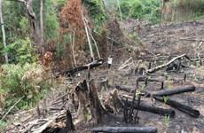 Phú Yên yêu cầu làm rõ vụ phá rừng phòng hộ Sơn Hòa như TTXVN phản ánh