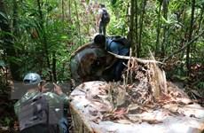 Quảng Ngãi: Kiểm tra thực tế hiện trường phá rừng phòng hộ Phổ Phong
