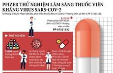 [Infographics] Pfizer thử nghiệm lâm sàng thuốc viên kháng SARS-CoV-2