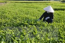 Mở lối ra cho nông sản của hợp tác xã trong bối cảnh dịch bệnh