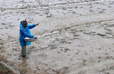 Tây Nguyên, Nam Trung Bộ cần tính đến nguồn nước tưới cho vụ Đông-Xuân