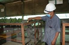 Mô hình nuôi chồn hương cho lợi nhuận đến 200 triệu đồng mỗi năm