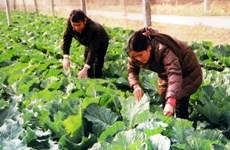 Sẽ nhân rộng mô hình nông sản, thực phẩm an toàn