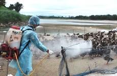 Cấp hóa chất sát trùng cho 3 tỉnh chống dịch cúm H5N1