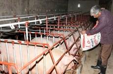Phát triển chăn nuôi nông hộ theo hướng hàng hóa