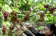NAFIQAD: Trung Quốc cần làm rõ 280 tấn thực phẩm có chất cấm