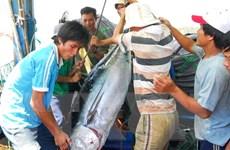 Sản lượng khai thác thủy hải sản ước đạt hơn 1 triệu tấn