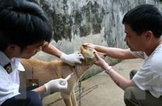 Công điện khẩn về tăng cường phòng chống bệnh dại trên vật nuôi