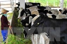 Đề xuất thành lập Ủy ban sữa quốc gia để điều tiết giá trên thị trường