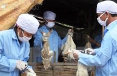 Xuất, cấp vắcxin phòng chống dịch bệnh cho các địa phương