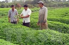 Nhìn lại VietGAP sau 6 năm: Nhiều bất cập và khó khăn cho nông dân