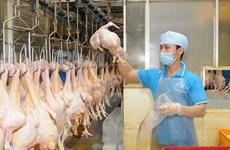 Nguồn cung thịt gia súc, gia cầm đủ để phục vụ nhu cầu dịp Tết