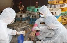 Xuất hơn 115 tỷ đồng mua bù vắcxin và hóa chất thú y dự trữ quốc gia