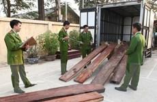 Yêu cầu xử lý nghiêm kẻ chở gỗ lậu đâm chết cán bộ kiểm lâm