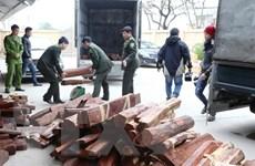 Tạm dừng cấp giấy phép nhập khẩu gỗ trắc vào Việt Nam