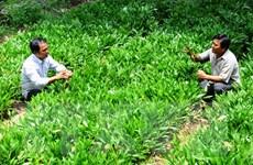Phát động Tết trồng cây nhân dịp Xuân Bính Thân 2016