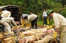 Đình chỉ mua bán, vận chuyển, giết mổ gia súc tại các vùng có dịch