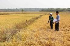 Khởi động dự án toàn cầu về nông nghiệp thích ứng biến đổi khí hậu