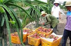 Từ 1/6: Đài Loan nhập khẩu trở lại thanh long của Việt Nam