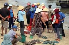 Khuyến cáo người dân không ăn cá chết hàng loạt để tránh bị ngộ độc