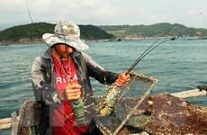 Tôm hùm sẽ là sản phẩm trọng điểm của các tỉnh miền Trung