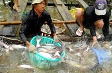 Tăng cường kiểm tra các quy định về nuôi cá lồng để giảm thiệt hại