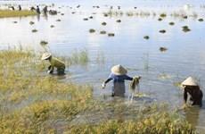 Đã khắc phục sự cố về điện cho các trạm bơm tiêu úng cứu lúa