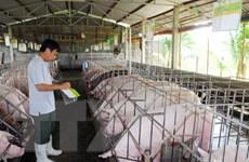 Hơn 280.000 hộ cam kết không sử dụng chất cấm trong chăn nuôi