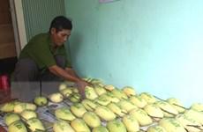 Cục Trồng trọt bác tin đồn xoài hạt nilon xuất xứ Trung Quốc