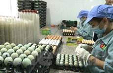 Người Việt Nam sử dụng trứng gà thấp hơn thế giới khoảng 3,5 lần