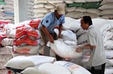 Thị trường lúa gạo: Giá giảm mạnh và tồn kho lớn trong tháng Chín