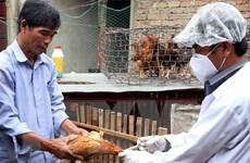 Cảnh báo nguy cơ xuất hiện dịch bệnh trên vật nuôi dịp cuối năm