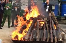 [Photo] Tiêu hủy hơn 2 tấn ngà voi và 70kg sừng tê giác