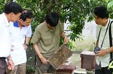 Mật ong bạc hà Mèo Vạc: Cần giữ chất lượng theo thương hiệu đăng ký