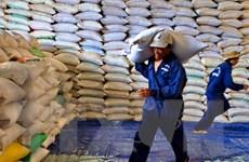 Thị trường lúa gạo rơi vào tình trạng ảm đạm do cung lớn hơn cầu