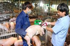 Xuất miễn phí 30.000 liều vắcxin phòng chống dịch lở mồm long móng