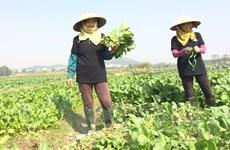 Bí kíp sản xuất nông sản an toàn bán giá rẻ nhưng vẫn lãi cao